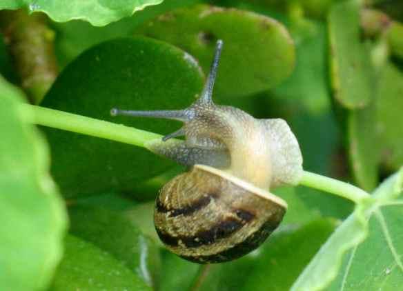 snails10