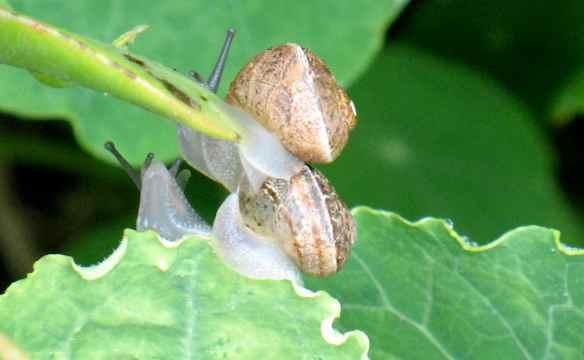snails12