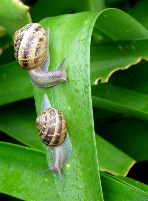 snails14