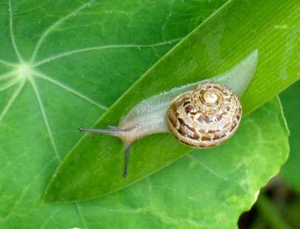 snails15