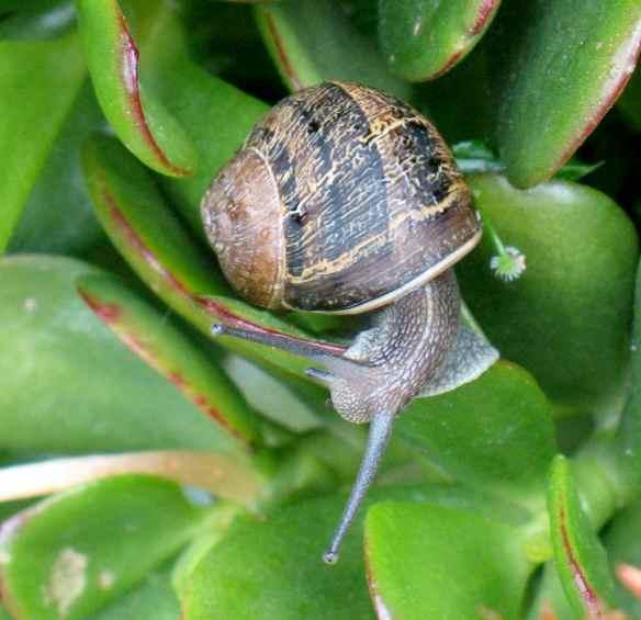 snails8