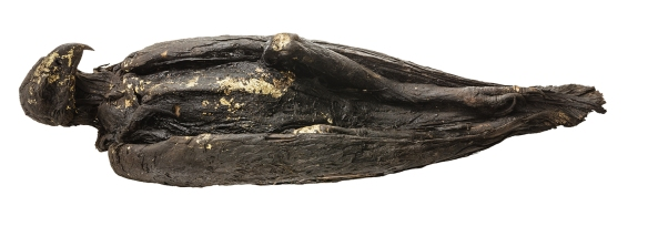 Mummified and gilded eagle.Photo by Anna Ressman. Courtesy of the Oriental Institute of the University of Chicago.