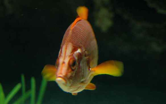 Judgmental fish thinks you will definitely forget what that file name means.