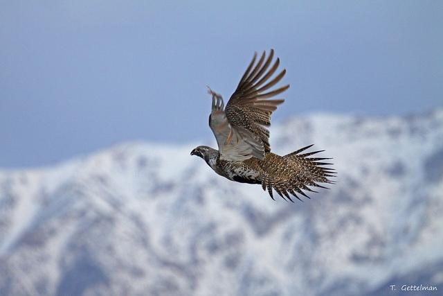 Avian flight I: built for flight | Tough Little Birds