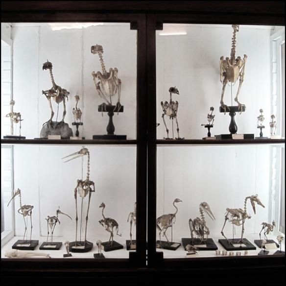 Lots of bird skeletons. Photo by Incognita Nom de Plume