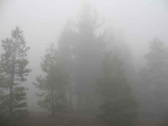 scout_fog