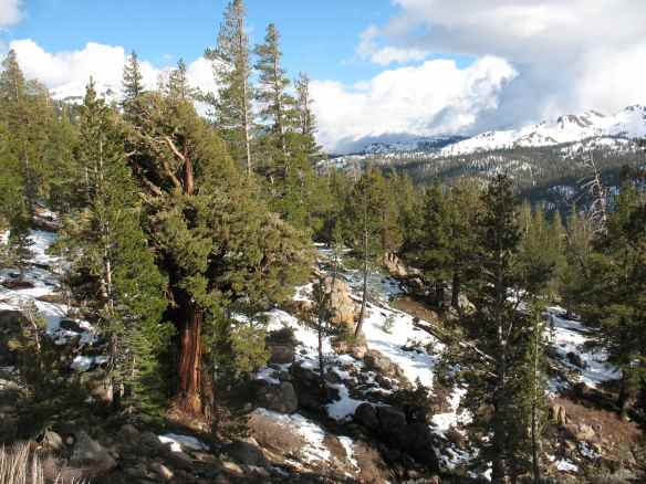 scout_snow+tree
