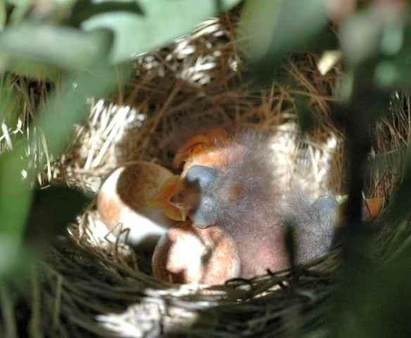 AMLE's nest