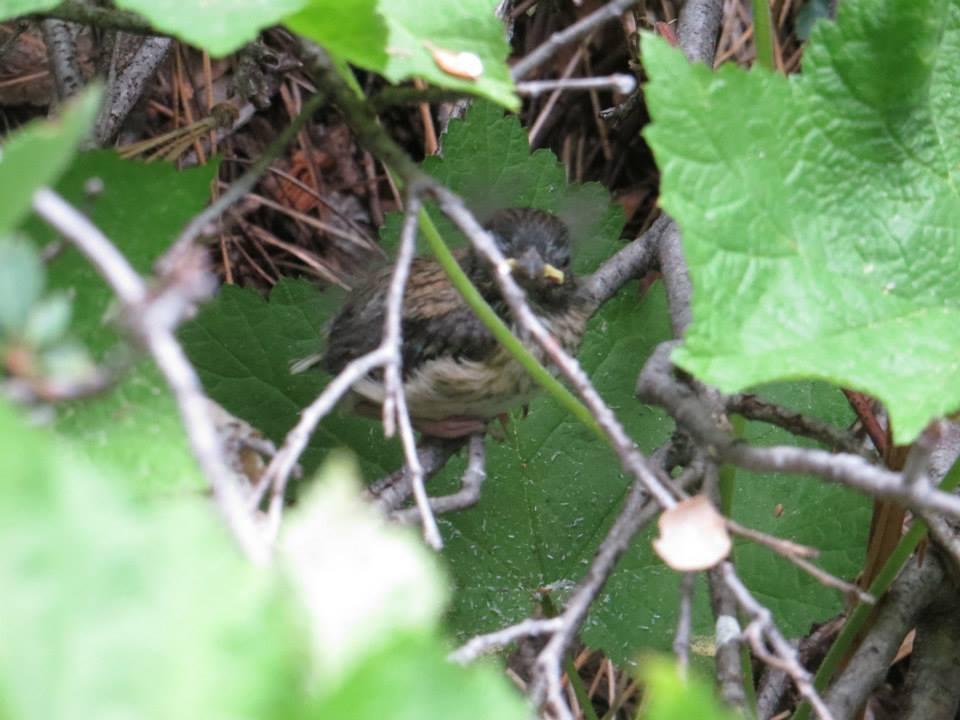 The fledgling problem | Tough Little Birds