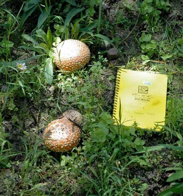 2013_mushroom_spots