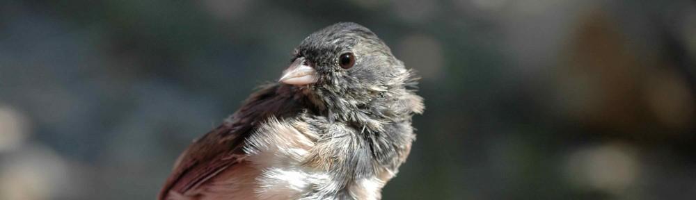Tough Little Birds