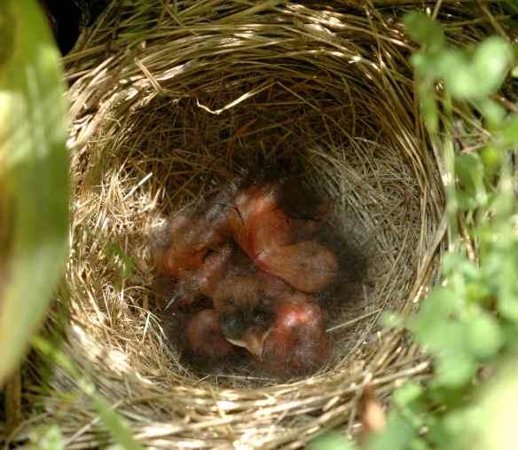 IKIA's nest