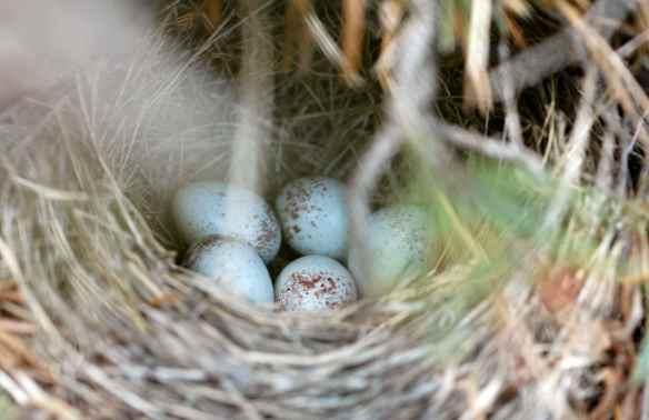 BARB's eggs