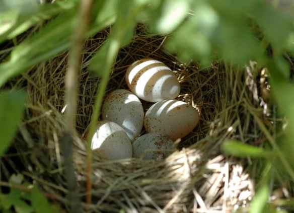 LORA's eggs