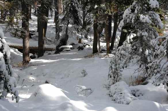 2013_winter_snow