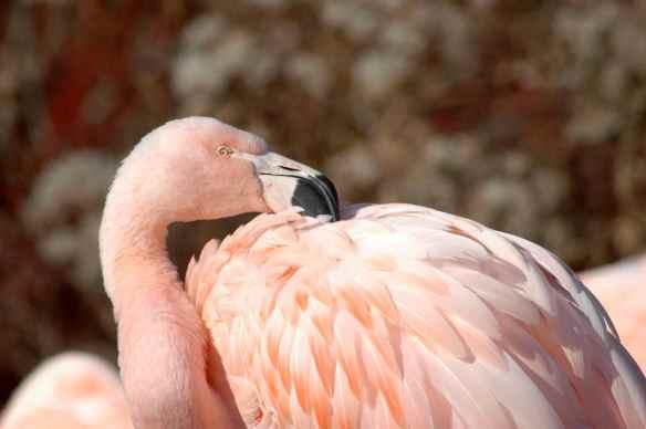 flamingofight11