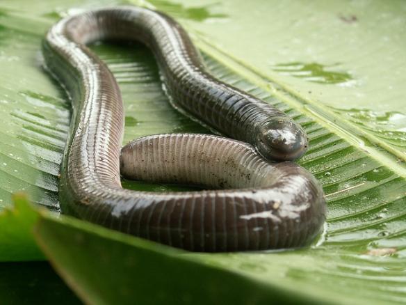 They do kind of look like worms... Photo by Teague O'Mara