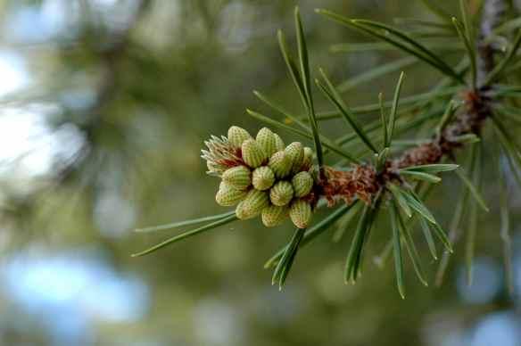 snapshots_tree