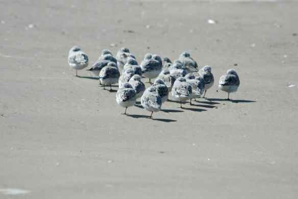 After all this I will relax with some Sanderling bowling.