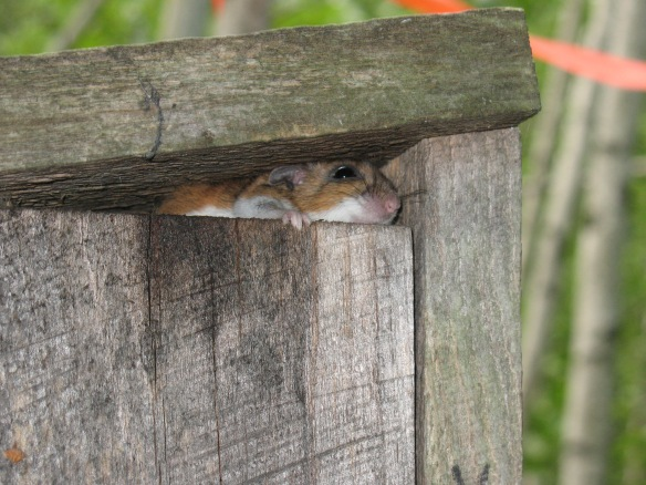 This is not what you want to see in your nestbox.