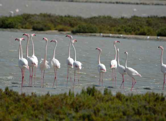 It could be worse - I could be lecturing flamingos. You just know they would be so judgmental.