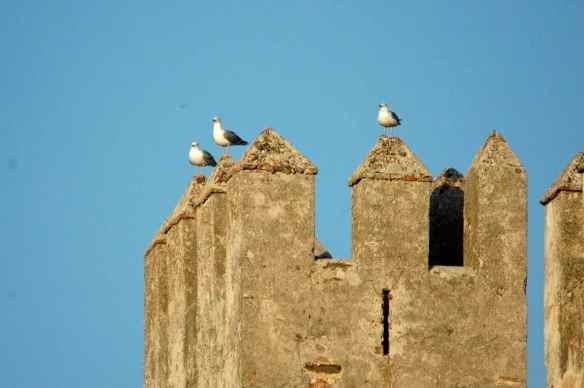 Gulls standing guard over Tarifa.
