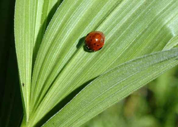 Ladybug, kind of?