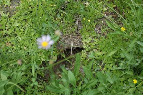 BALI's nest.