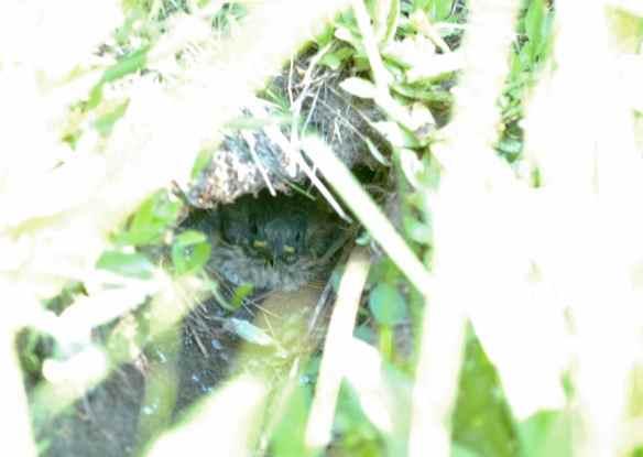 underground_BALIs_nest3