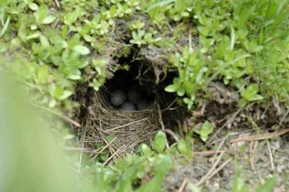 ROSA's nest