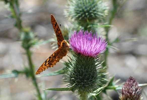 2014bugs_butterfly