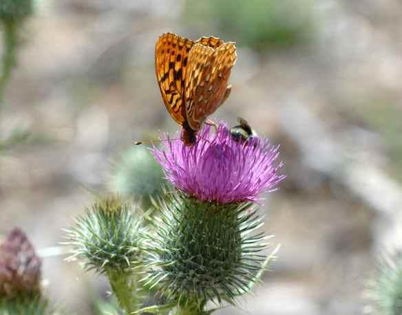 2014bugs_butterfly+bee2