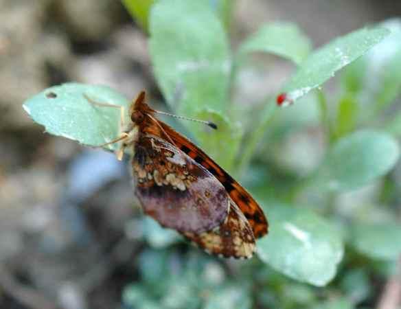 2014bugs_orangebutterfly1