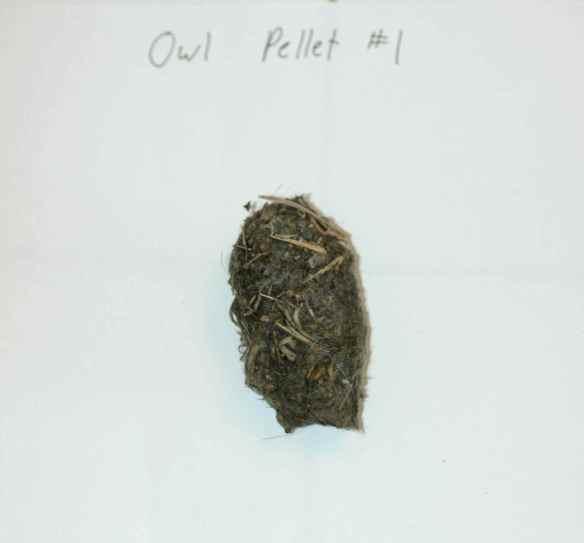 owlpellets_pellet1