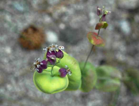 2014_flowers2_purplestack2