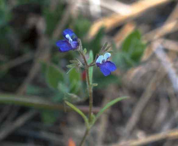 2014_flowers_blue