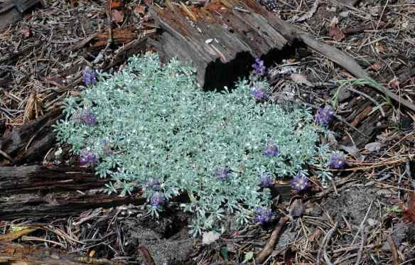 2014_flowers_purplebunch2