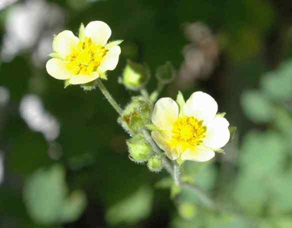 2014_flowers_yellow