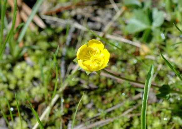 2014_flowers_yellow2