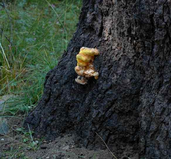 2014_fungi_yellow