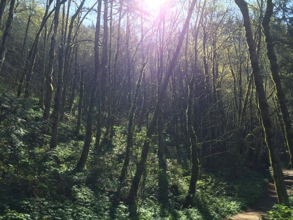 Forest near Portland, Oregon.