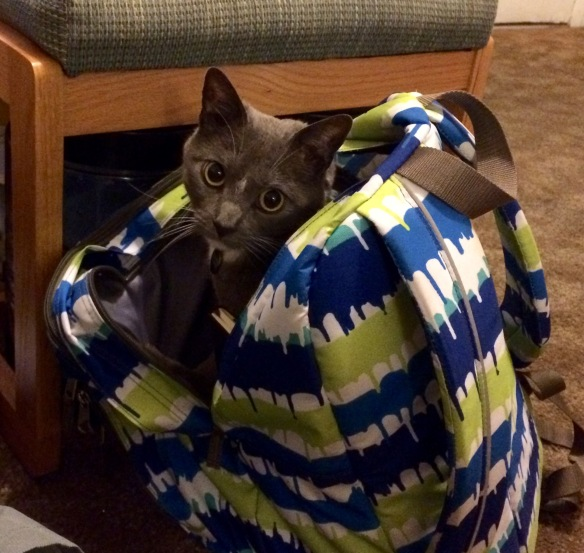 Limpet in my backpack.