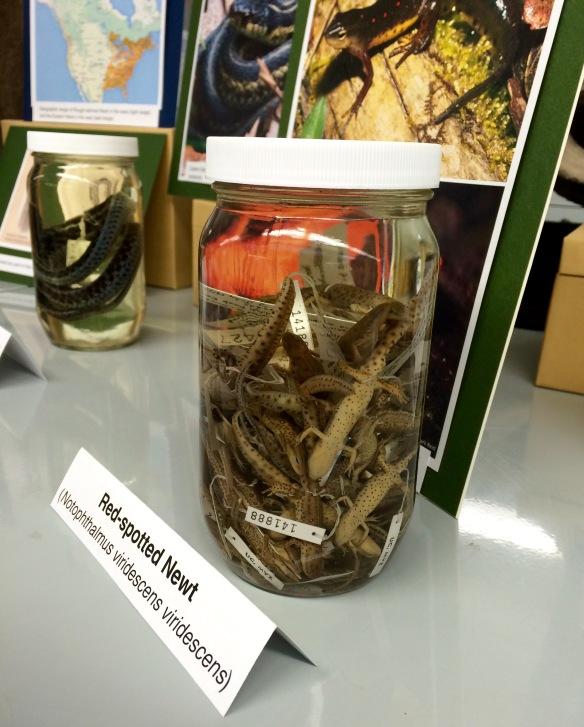 Jar o' newts at Cal Day.