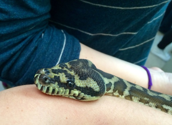 Live snake doing outreach at Cal Day (not too close to the tucos-tucos, though).
