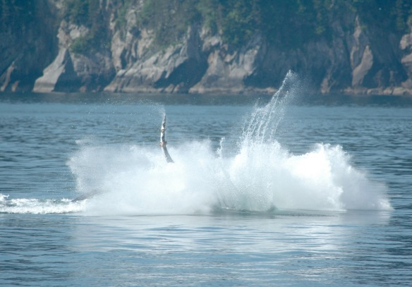 humpback_breaching4