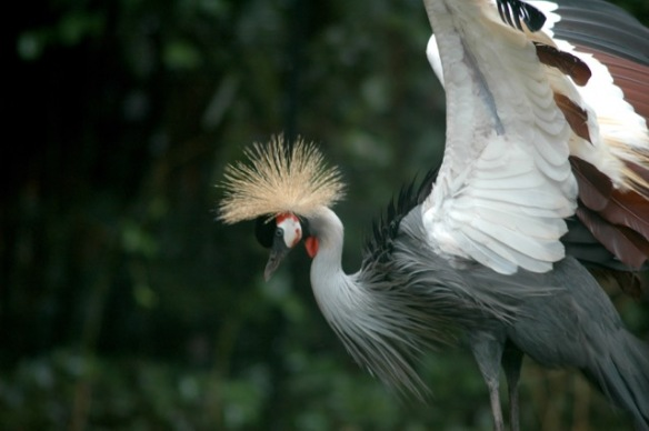 Black Crowned Crane appreciates your understanding.