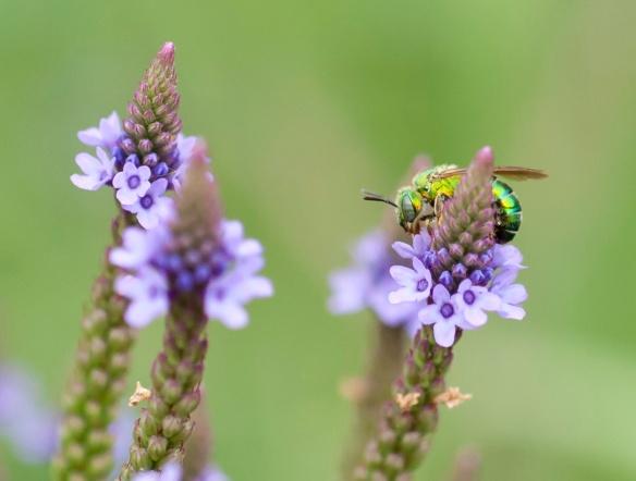 DSC_2475summerbug