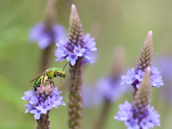 DSC_2493summerbug